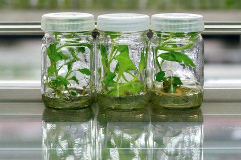 بطری های کشت گیاهی | انواع بطری های کشت گیاهی | خرید بطری های کشت گیاهی