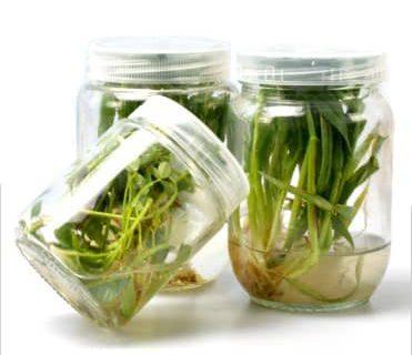 انواع بطری های کشت گیاهی | خرید بطری های کشت گیاهی | قیمت بطری های کشت گیاهی