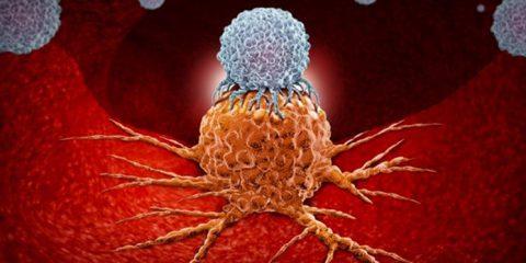 بی نظمی در چرخه ی سلولی و ارتباط آن با سرطان