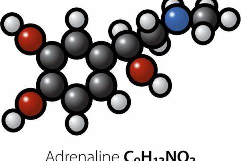 هورمون آدرنالین -آدرنالین و استرس – آدرنالین و کورتیزول – غده فوق کلیوی و آدرنالین