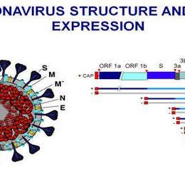 کورونا ویروس چیست؟ | راه های جلوگیری از ابتلا به کورونا ویروس جدید